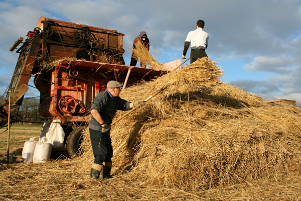 Threshing at Balladoole